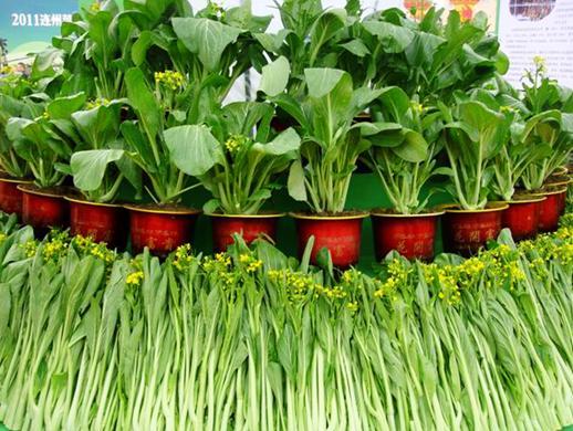 舌尖上的连州,第二届菜心节12月8日开幕 山西图片