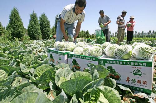 中国 山西/寿阳现代农业