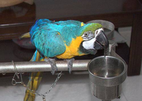 金刚鹦鹉是国家的二级保护的品种