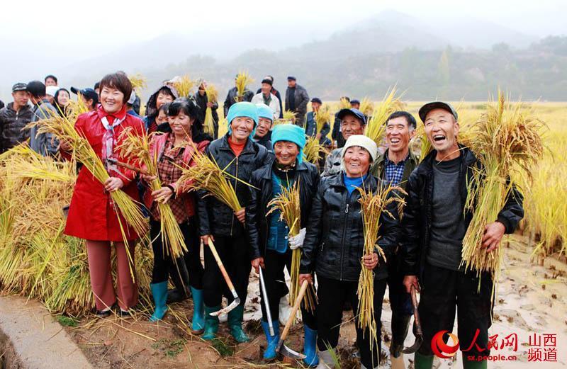 山西盂县:水稻喜获丰收 农民收割忙