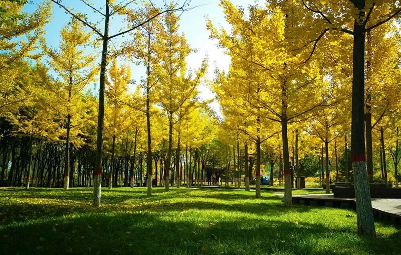 组图:金秋十月 忻州人民公园秋色美如画