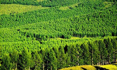 全国完成造林七百三十余万公顷