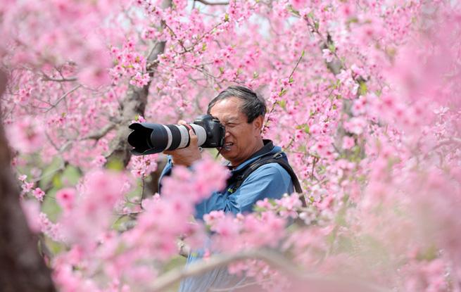 山西平陆:万亩桃花竞相开放 姹紫嫣红美艳动人
