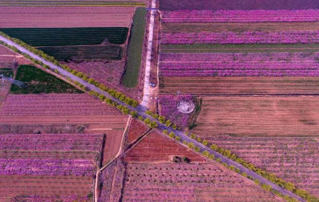 山西平陆:万亩桃花竞相开放
