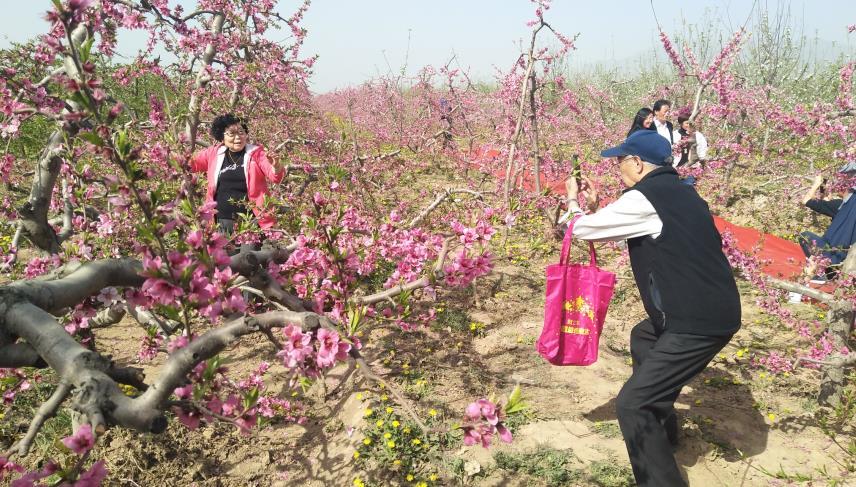 山西万荣桃花节开幕 十里桃花吐芳华