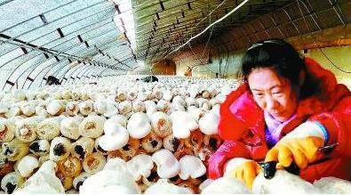 山西沁源:一个英雄县的脱贫故事
