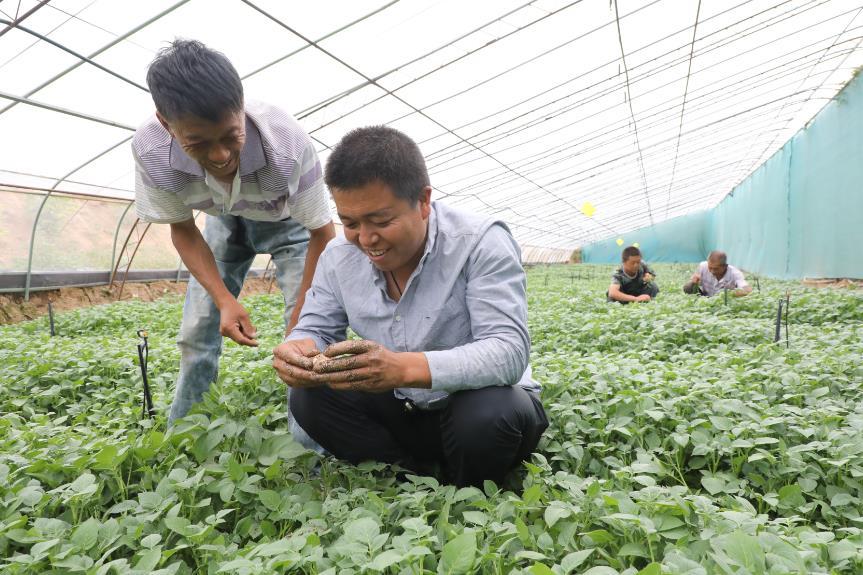 山西隰县一贫困户:土豆地里趟出致富路