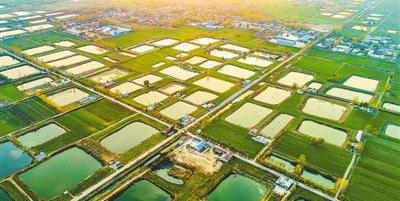生态治理 助农增收